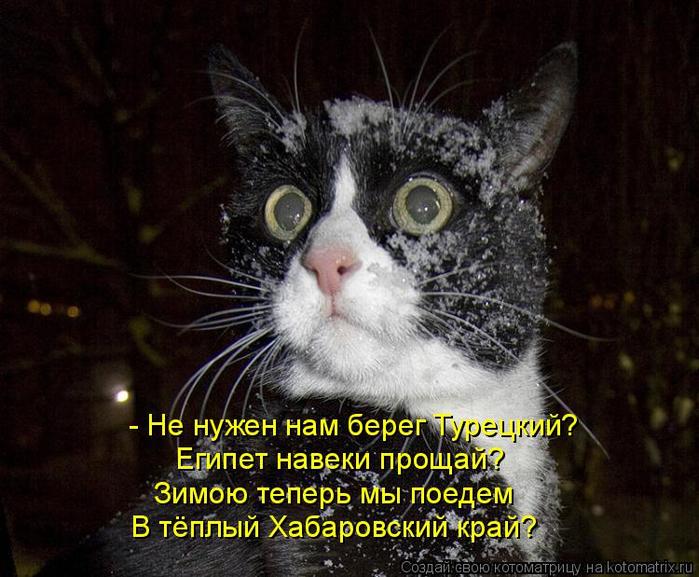 kotomatritsa_yv (700x577, 405Kb)