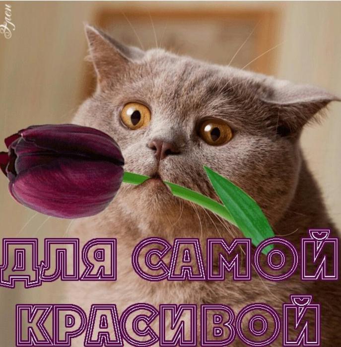 ti_samaja_krasivaja_dobraja_milaja (687x700, 451Kb)