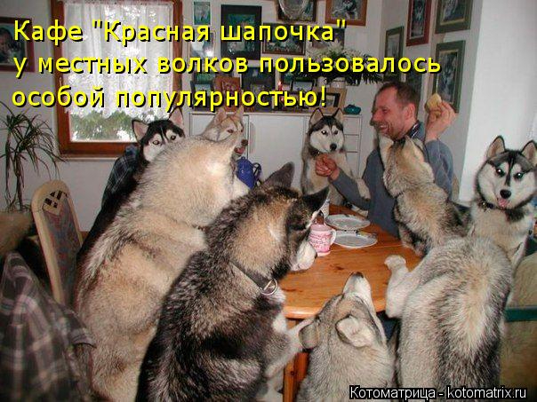kotomatritsa_0 (604x453, 283Kb)