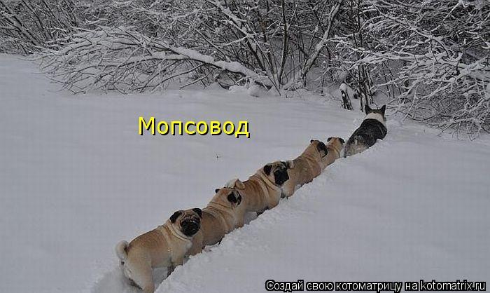 kotomatritsa_if (700x418, 154Kb)
