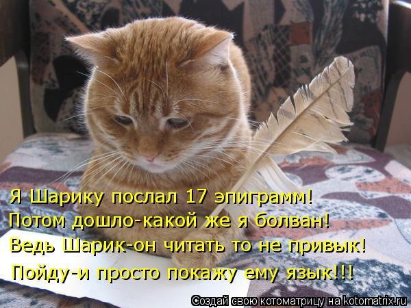 kotomatritsa_jK (600x450, 252Kb)