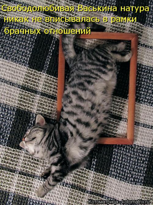 kotomatritsa_O (500x667, 321Kb)