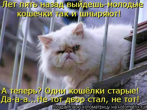 kotomatritsa_q3 (500x375, 181Kb)