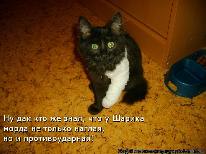 kotomatritsa_rI (700x524, 419Kb)