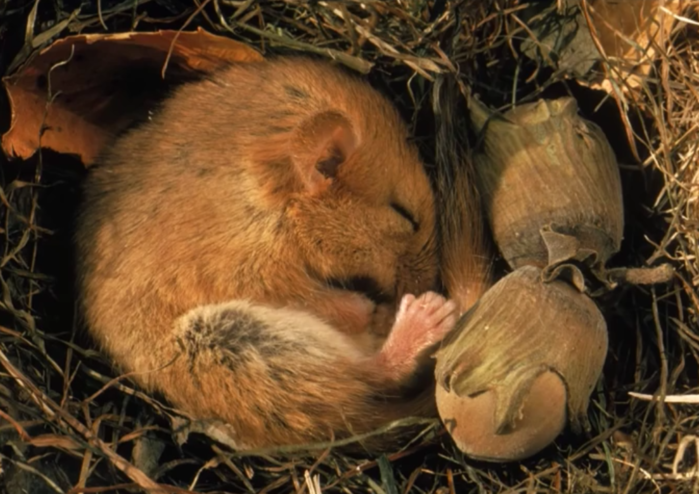 why-do-animals-hibernate (700x494, 577Kb)