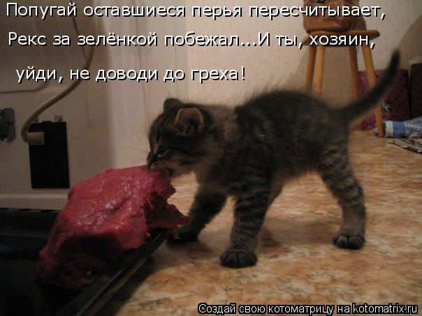 2714816_kotomatritsa_8d (604x453, 49Kb)