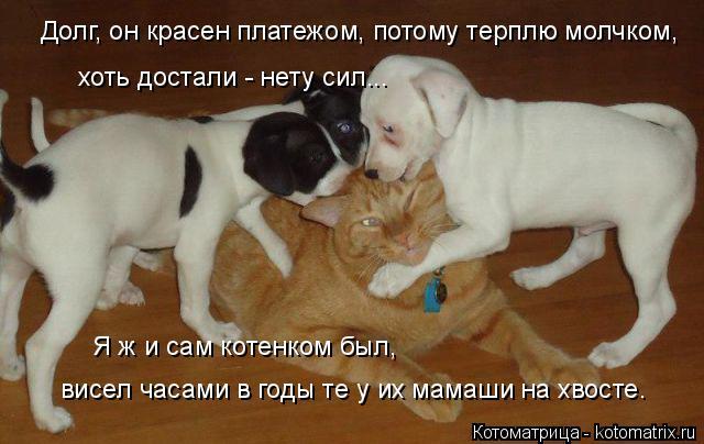 kotomatritsa_0 (640x404, 195Kb)