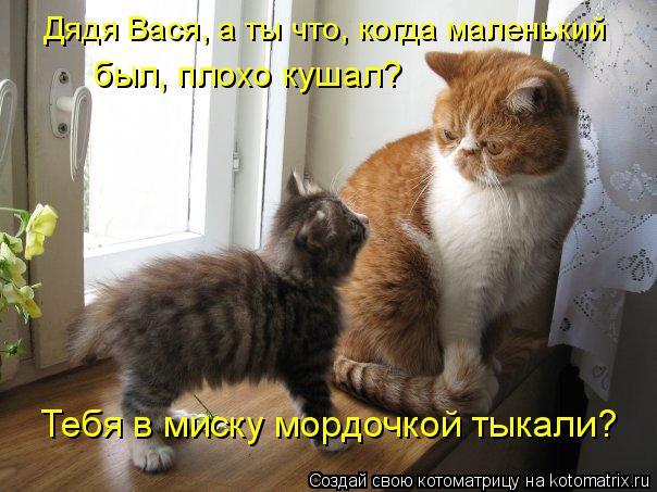 kotomatritsa_h (604x453, 231Kb)