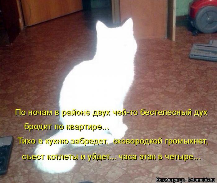 kotomatritsa_h6 (700x589, 378Kb)
