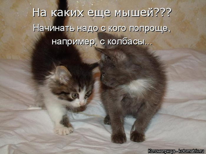 kotomatritsa_l (1) (700x524, 303Kb)
