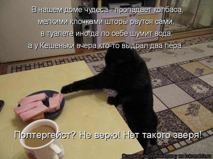 kotomatritsa_R (700x524, 335Kb)