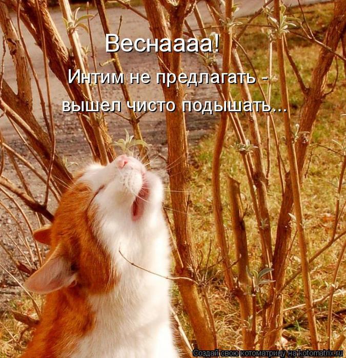 kotomatritsa_SY (675x700, 629Kb)