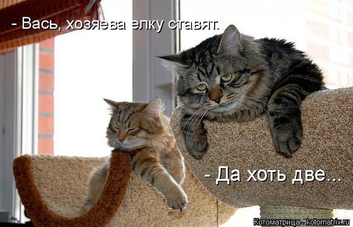 kotomatritsa_x (700x449, 294Kb)