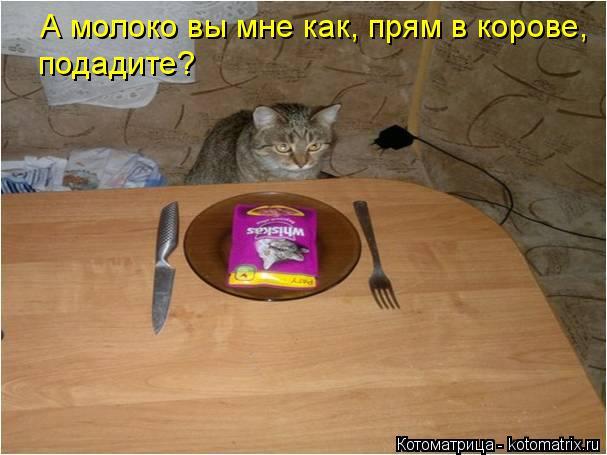 kotomatritsa_1X (607x455, 167Kb)