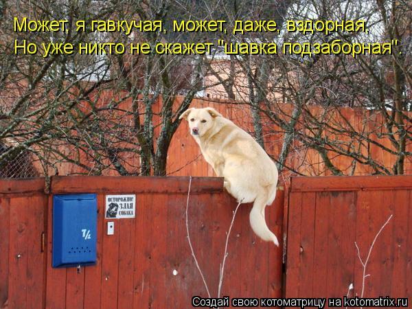 kotomatritsa_Co (600x450, 289Kb)