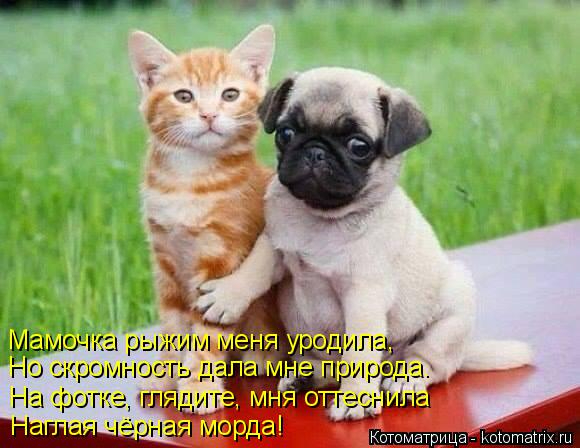 kotomatritsa_l (580x448, 225Kb)