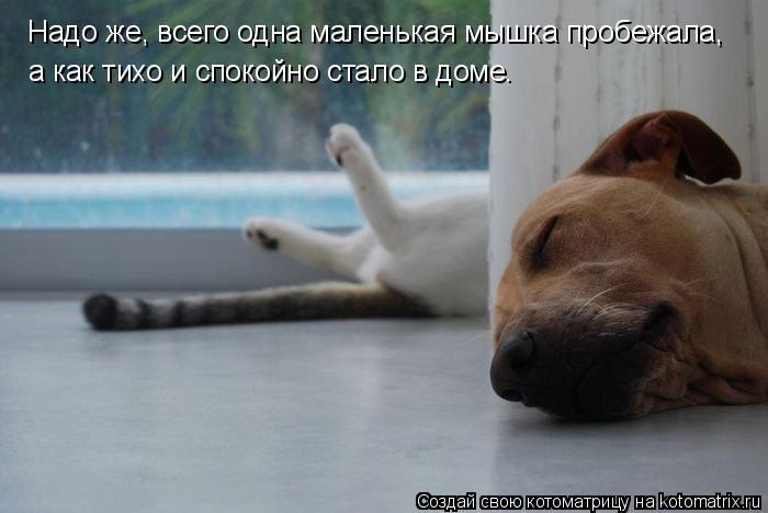 kotomatritsa_T (1) (700x468, 154Kb)