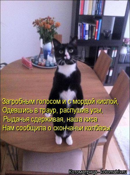 kotomatritsa_V (1) (448x600, 227Kb)