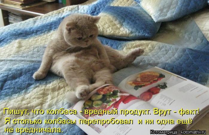 kotomatritsa_v5 (700x454, 369Kb)