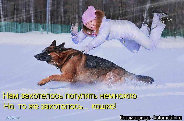 kotomatritsa_2G (604x396, 199Kb)