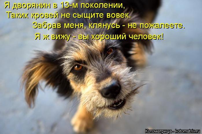 kotomatritsa_5h (700x465, 314Kb)
