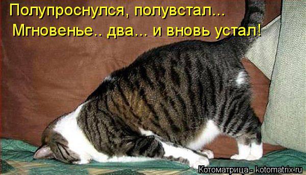 kotomatritsa_7F (600x344, 192Kb)