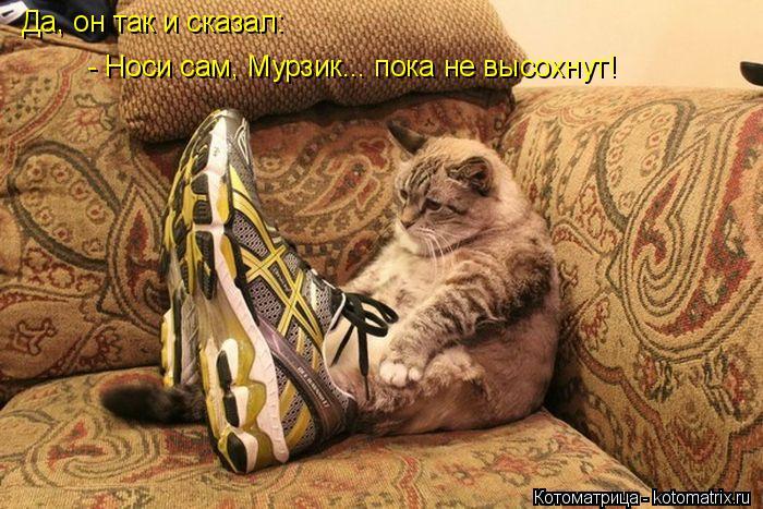 kotomatritsa_bp (700x467, 329Kb)