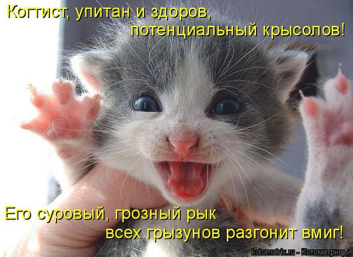 kotomatritsa_c (700x509, 390Kb)