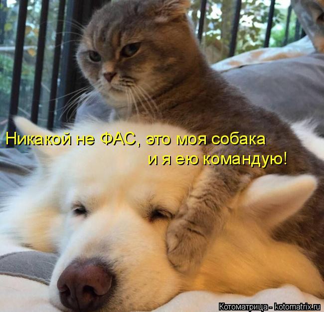 kotomatritsa_k (650x627, 270Kb)