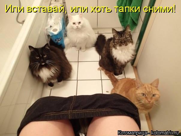 kotomatritsa_v0 (604x454, 152Kb)