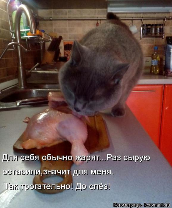 kotomatritsa_8 (578x700, 350Kb)