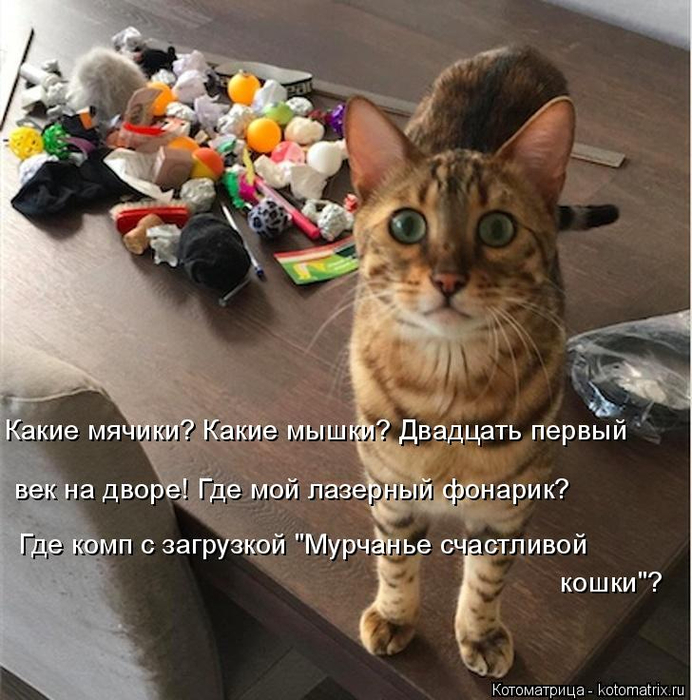 kotomatritsa_AZ (1) (692x700, 428Kb)