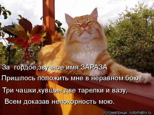 kotomatritsa_b (640x480, 323Kb)
