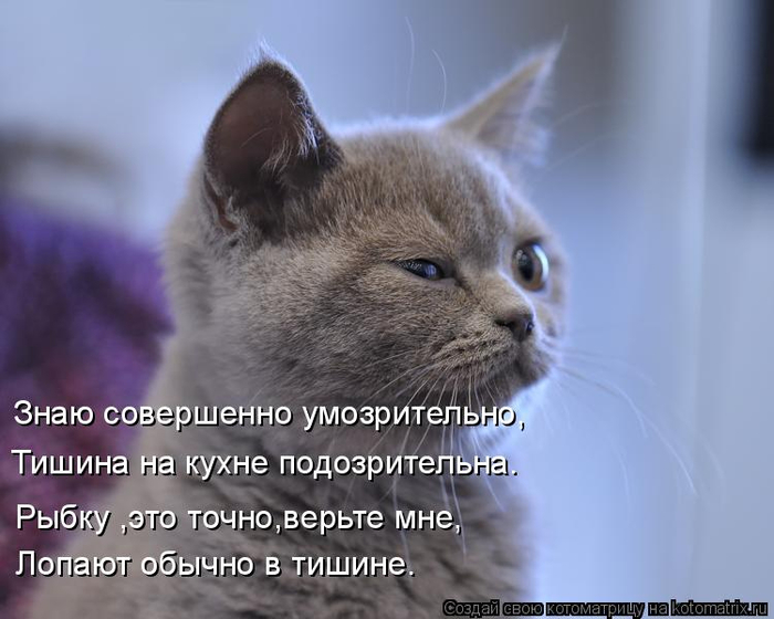kotomatritsa_E (700x560, 254Kb)
