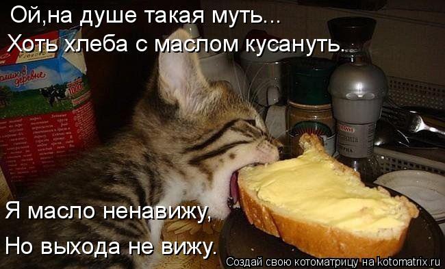 kotomatritsa_r (1) (650x393, 201Kb)