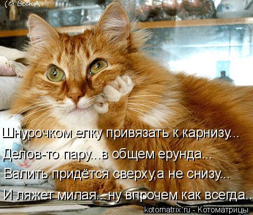 kotomatritsa_U (500x425, 239Kb)