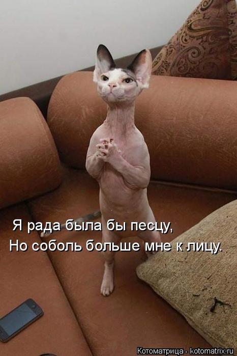 kotomatritsa_Z- (466x700, 255Kb)