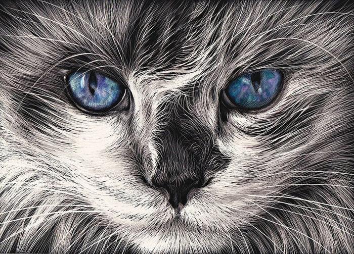 Mad Cat (700x503, 468Kb)