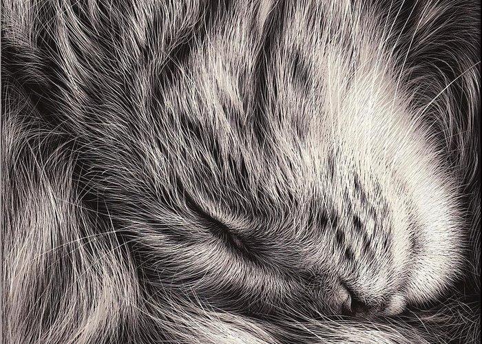 cat-nap-elena-kolotusha (700x500, 356Kb)