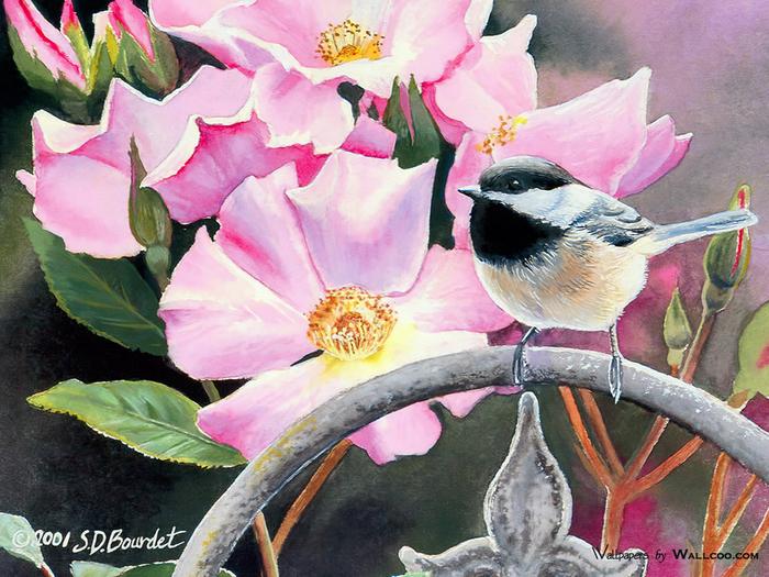 kb_Bourdet_Susan-2007_Songbirds_Wallpaper-07_wallcoo.com (700x525, 511Kb)