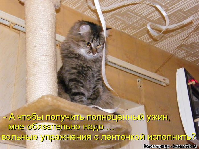 kotomatritsa_2m (700x524, 418Kb)