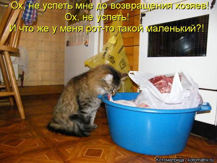kotomatritsa_Dv (700x524, 415Kb)