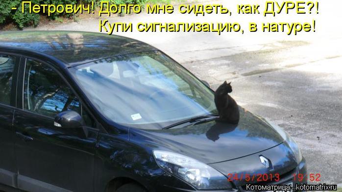 kotomatritsa_P (700x393, 296Kb)