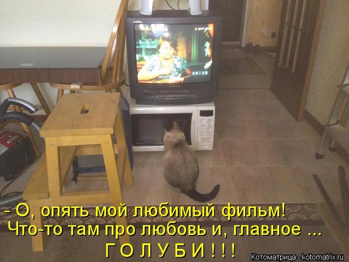 kotomatritsa_w (700x524, 341Kb)