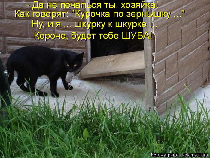 kotomatritsa_x (2) (700x524, 430Kb)