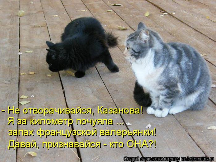 kotomatritsa_y (700x524, 424Kb)
