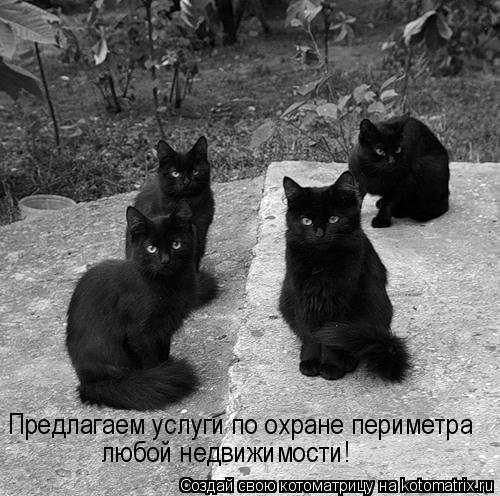 kotomatritsa_c (500x496, 117Kb)