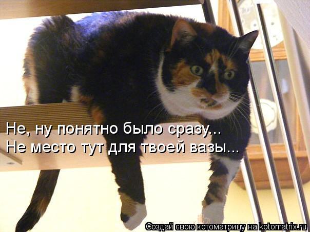 kotomatritsa_Cw (604x453, 198Kb)
