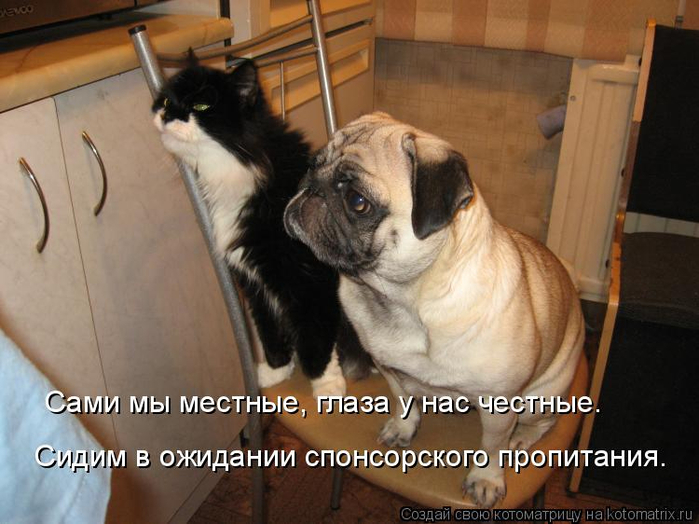 kotomatritsa_pQ (700x524, 335Kb)