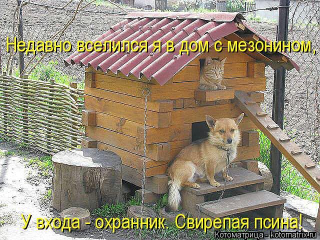 kotomatritsa_Ti (640x480, 395Kb)